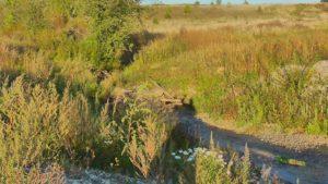 речка Шакша